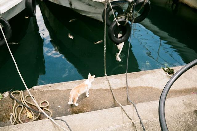 魚を獲ろうとする猫