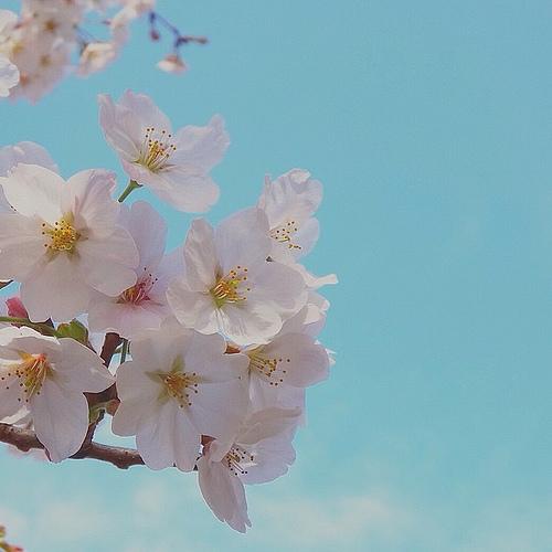 春ですよー(>◡<)
