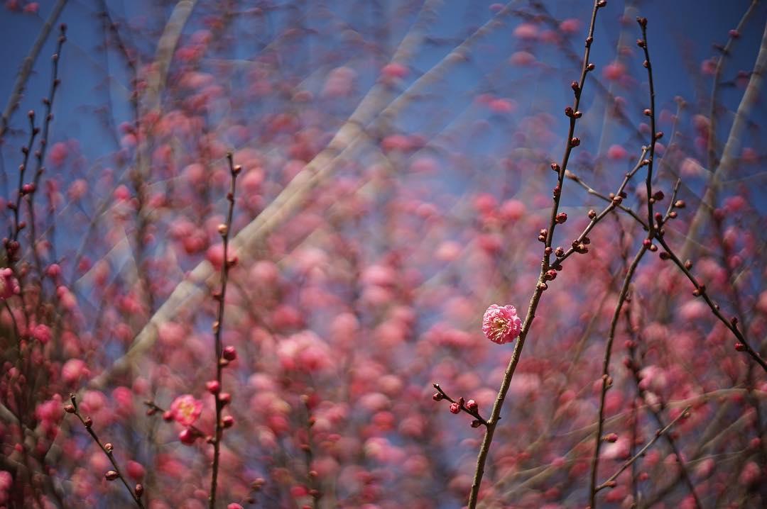 いつかの梅