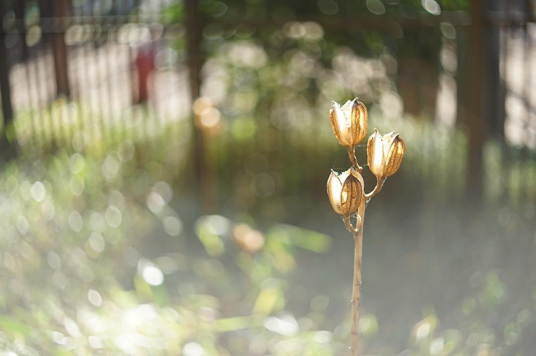 いつかの冬枯れ  #sony #sonyalpha #sonya7ii #sonycamera  #sonyimages #sonyphotography #50mm #オールドレンズ #oldlens #bokeh #canon #canonfl50mm #キヤノン #ぐるぐるボケ  #単焦点レンズ