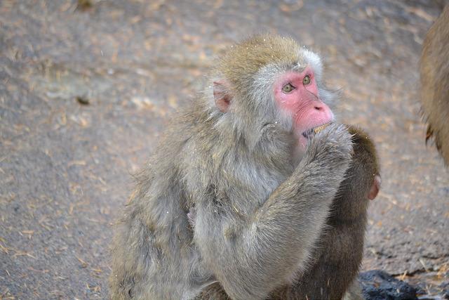 餌を食べる猿